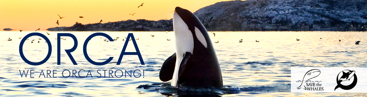 Orca-New-Banner
